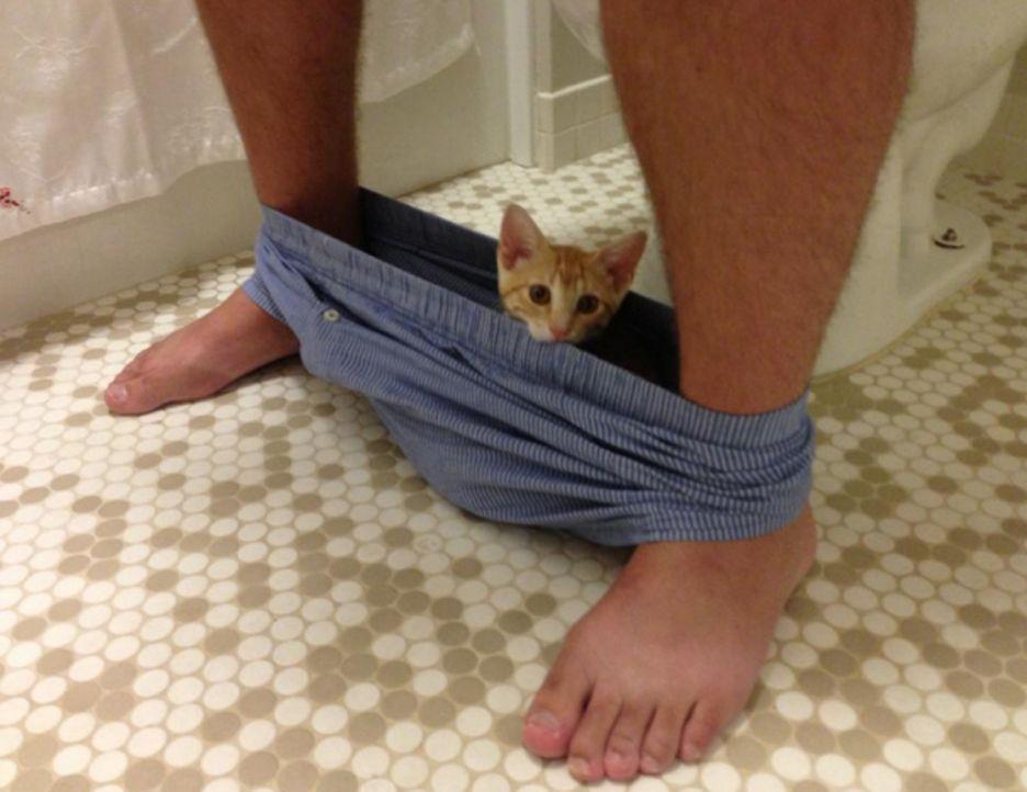 Culottes sur la chatte